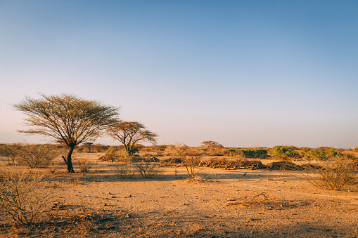 Trees in plains of Africa 1137955454