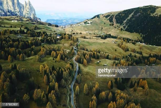 trees in seiser alm - conifera foto e immagini stock