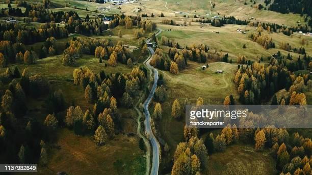 サイザー alm の樹木 - 南チロル ストックフォトと画像