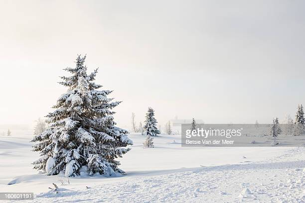 Trees in snow landscape,church in misty background