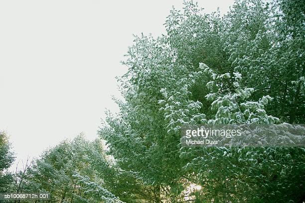 trees in snow - wasserform stock-fotos und bilder