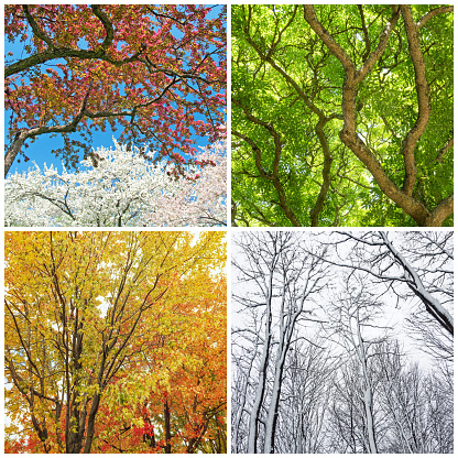 Trees in spring, summer, autumn and winter 492099924