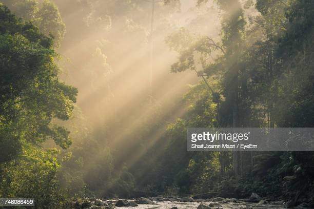 trees in sunlight - shaifulzamri stock pictures, royalty-free photos & images