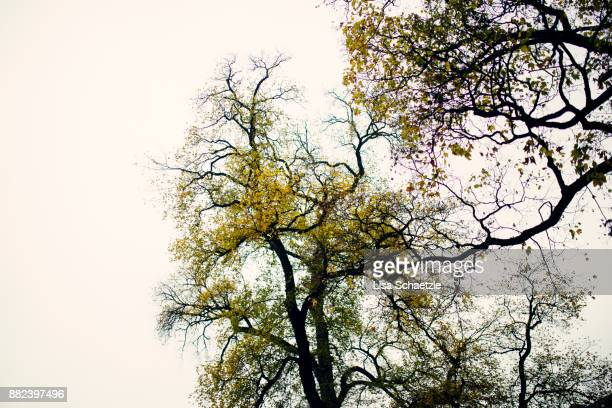Trees in the autumn