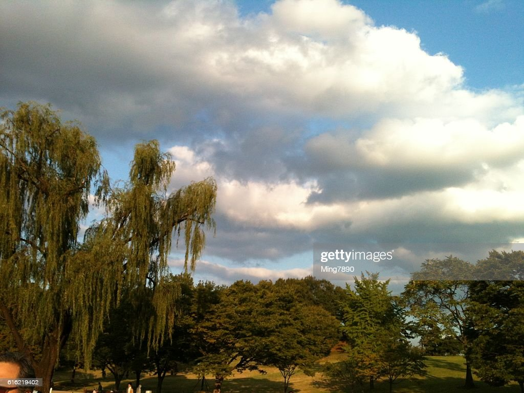 Trees in the black cloud : Stock Photo