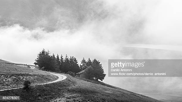 trees in the fog in the sibillini mountains - 16x9 format stock pictures, royalty-free photos & images