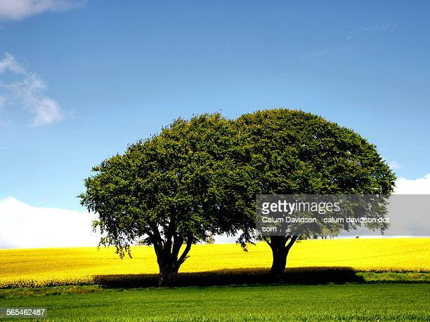 Trees in the landscape