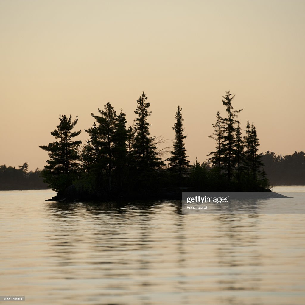 Trees in the middle of a lake : Stock Photo