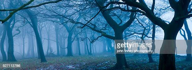 Trees in the mist. English Peak District. UK. Europe.