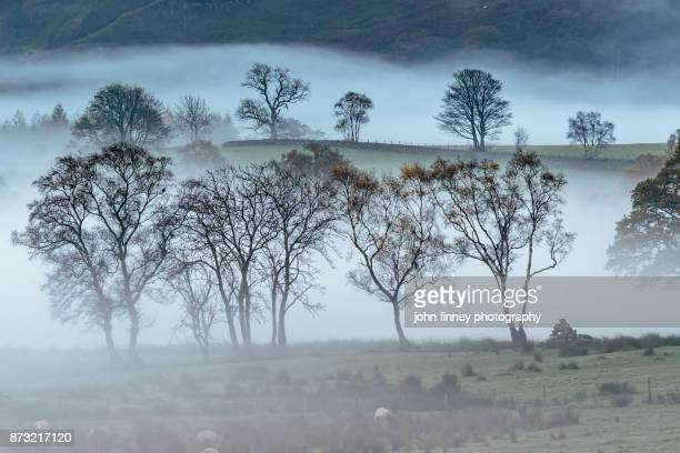 Trees in the mist. Lake District National park. UK.