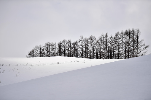 Trees in the park or forest in the winter snow, Japan - gettyimageskorea
