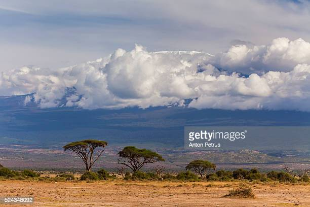 trees in the savannah on the background of clouds - anton petrus stock pictures, royalty-free photos & images