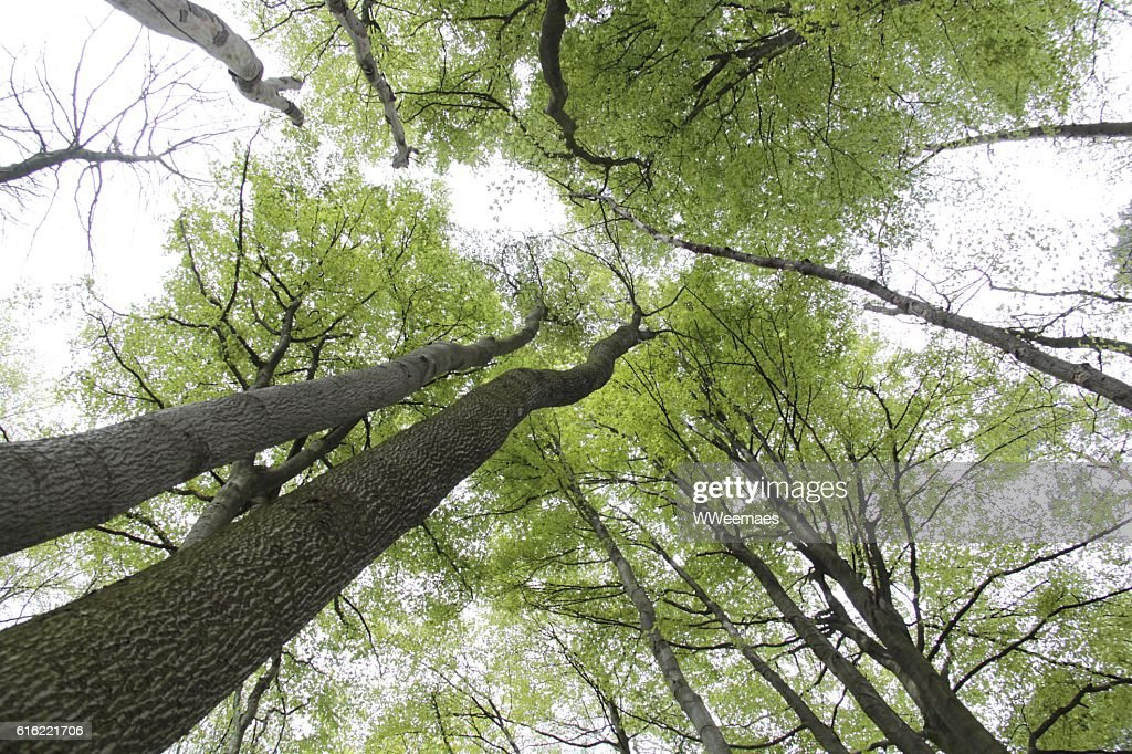 trees in the sky : Stock Photo