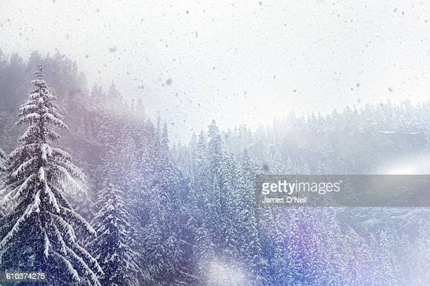 trees in the snow - snowing stock pictures, royalty-free photos & images