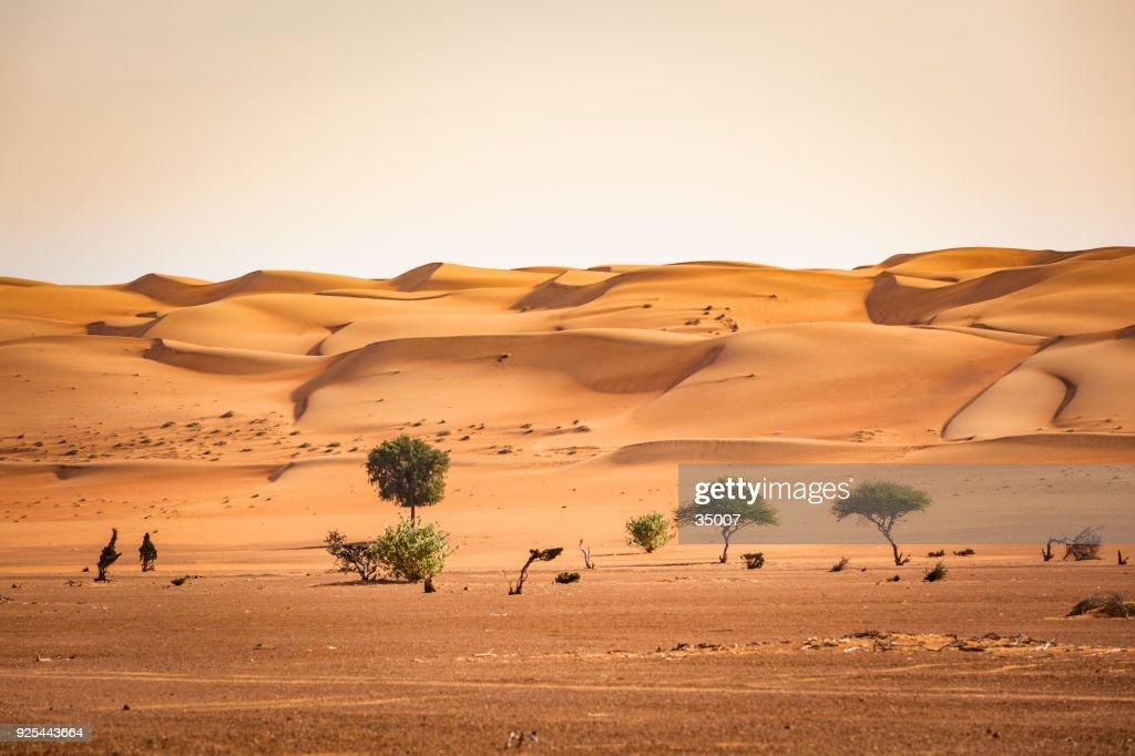 árboles en el desierto de wahiba arena del Sultanato de Omán : Foto de stock
