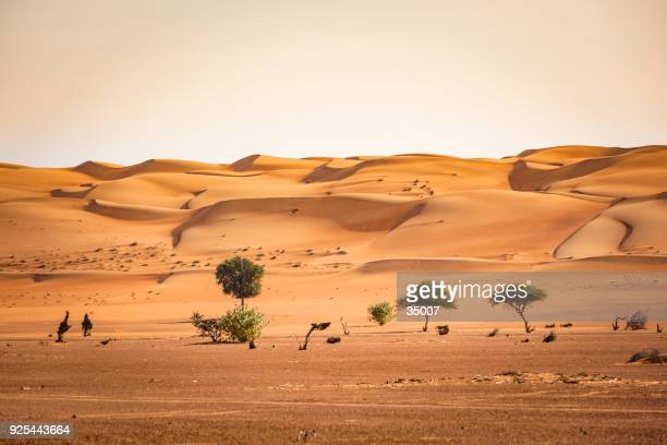 trees in the wahiba sand desert of sultanate of oman