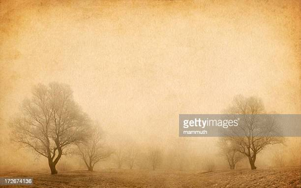 trees in the winter fog
