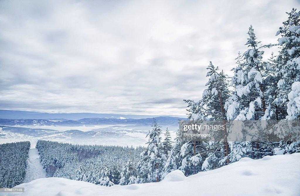 冬の木 : ストックフォト