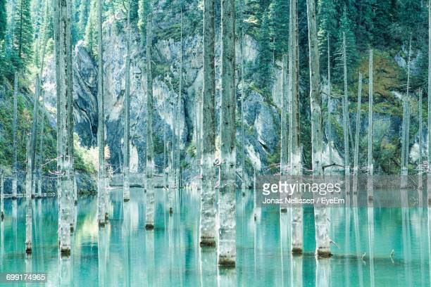 trees in water - kyrgyzstan stock pictures, royalty-free photos & images