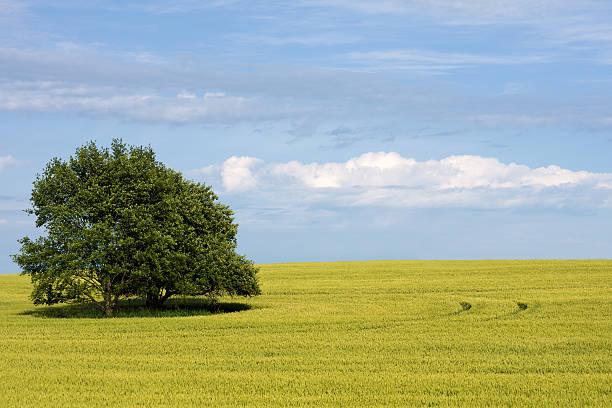 Trees In Wheat Field Wall Art
