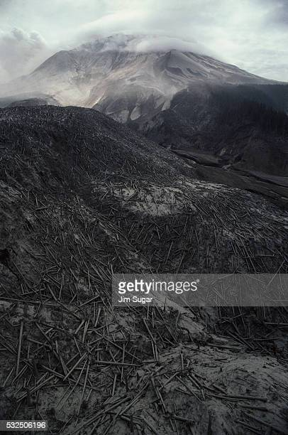 Trees lay scattered across hills covered in ash following the eruption of Mount St. Helens. | Location: Washington, USA.