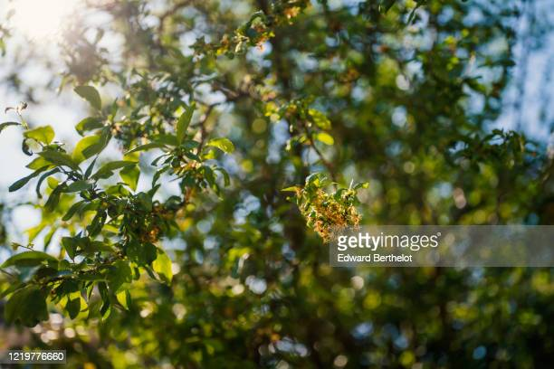 trees leaves and flowers under the sun - edward berthelot photos et images de collection