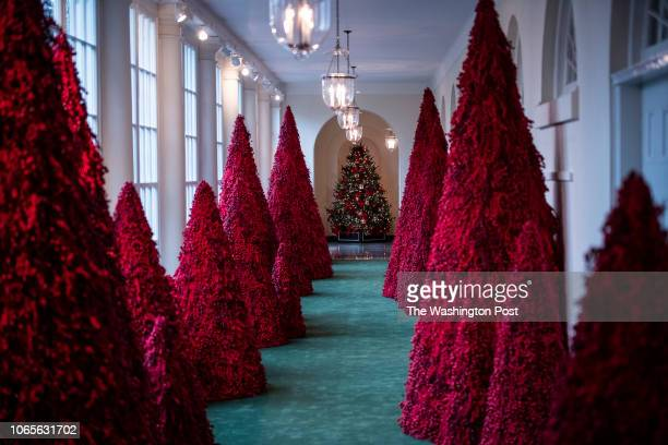 Trees line the East Colonnade during the White House Christmas preview in the East Wing of the White House on Monday Nov 26 2018 in Washington DC