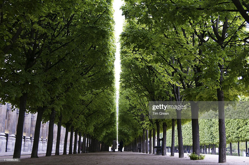 Trees lining the path : Stock Photo