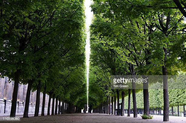 trees lining the path - palais royal stock pictures, royalty-free photos & images