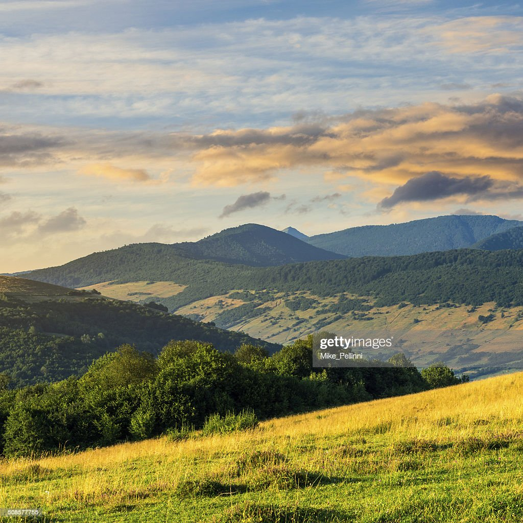 trees near valley in mountains  on hillside : Stock Photo