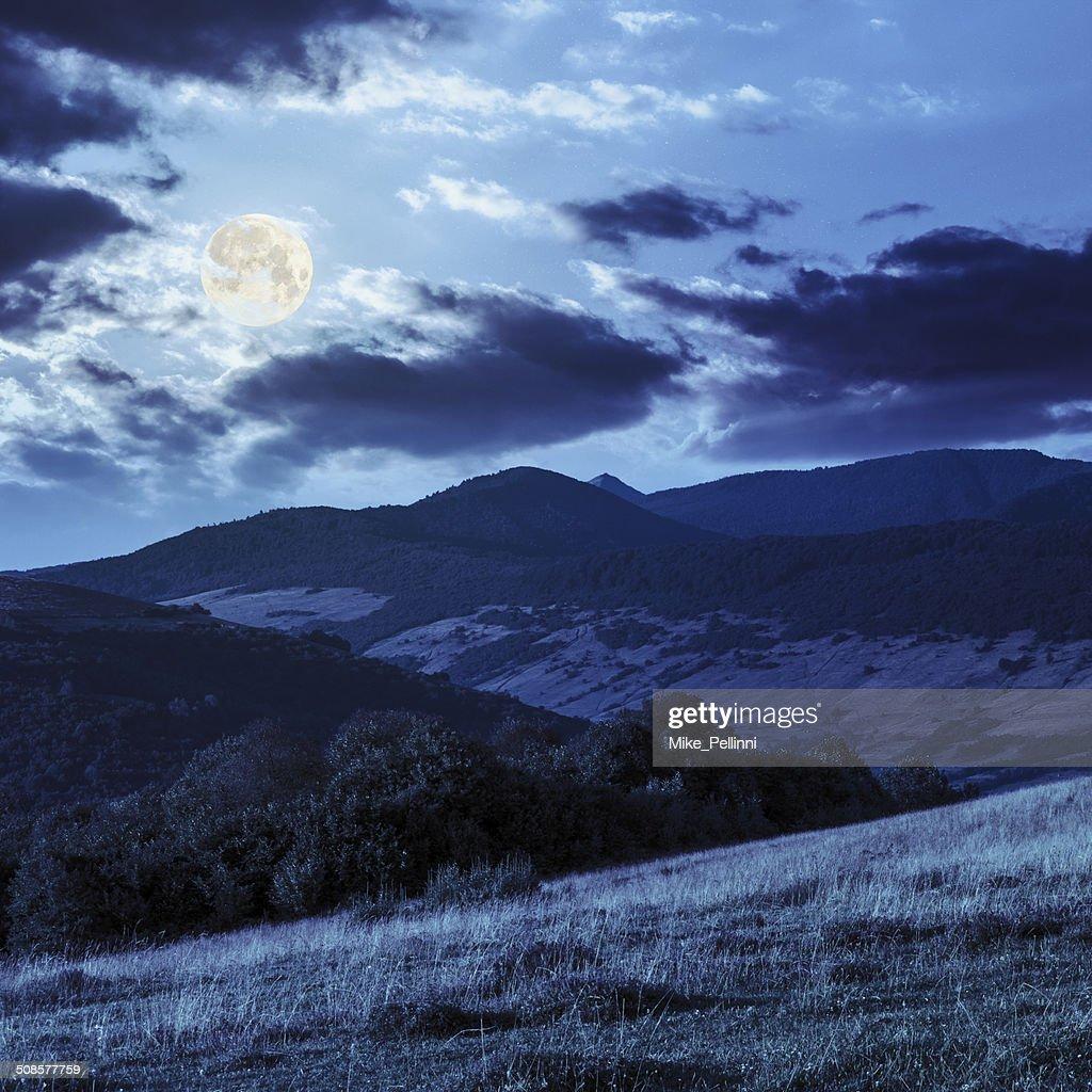 trees near valley on mountains  hillside in moon light : Stock Photo