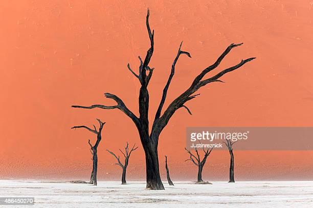 Bäume von Deadvlei