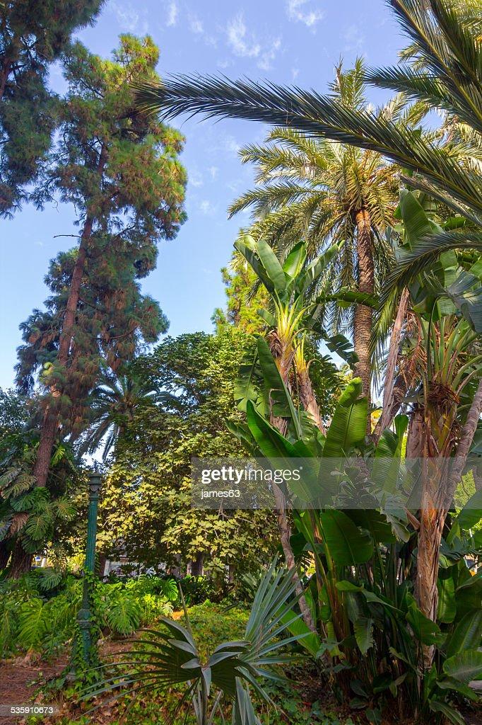 Árboles de diferentes tipos de un hermoso parque de Málaga, España : Foto de stock