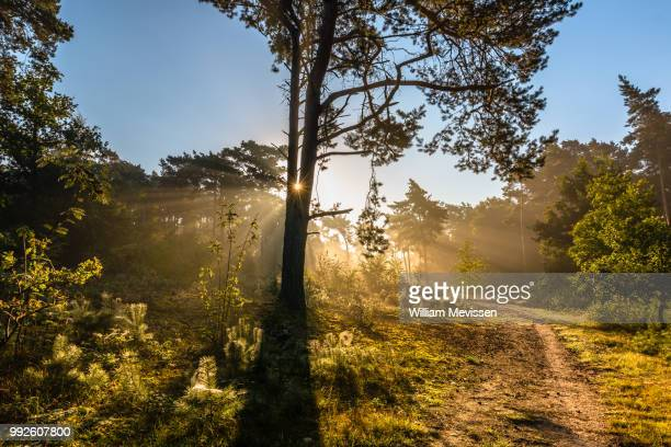 trees of light - william mevissen stock pictures, royalty-free photos & images