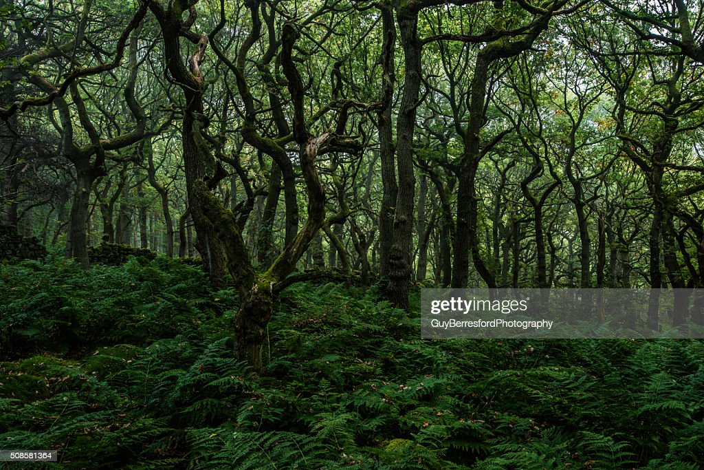 Trees of Padley Gorge : Stockfoto