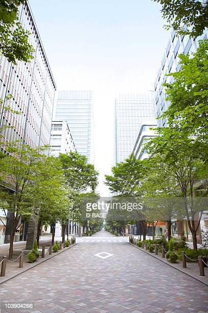 Trees of street lined with office buildings.