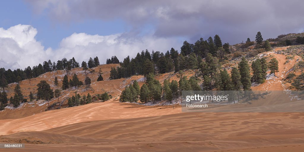 Trees on a hill : Stock Photo