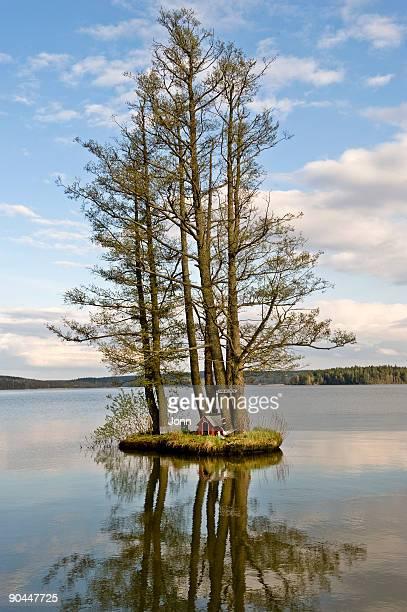 trees on a holm sweden. - erle stock-fotos und bilder