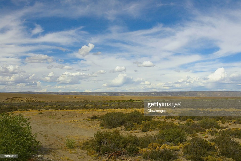 Trees on a landscape, National Route 40, Patagonia, Argentina : Stock Photo