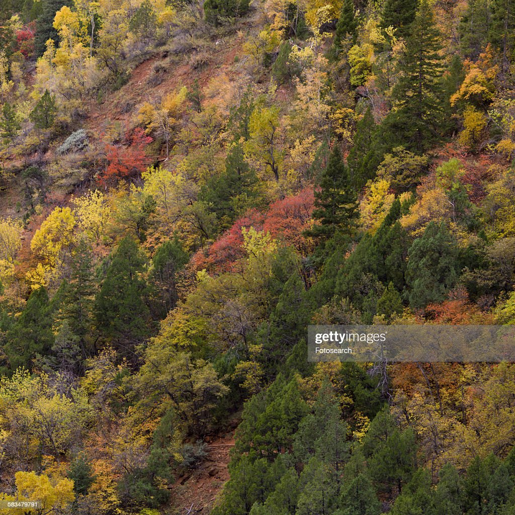 Trees on a mountain : Stock Photo