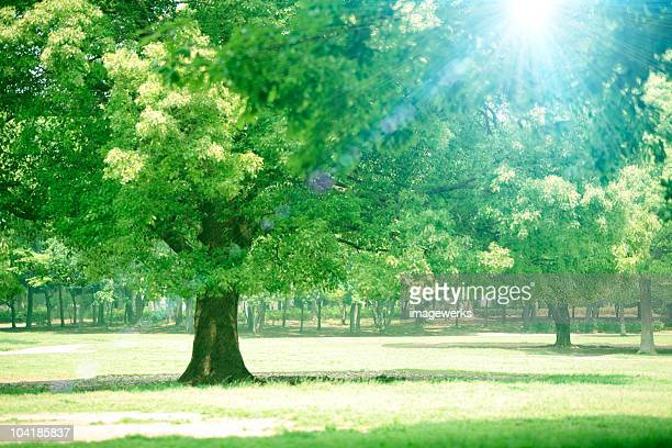 trees on a sunny day - 青々とした ストックフォトと画像