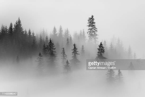 trees on against sky during foggy weather - fog stock pictures, royalty-free photos & images