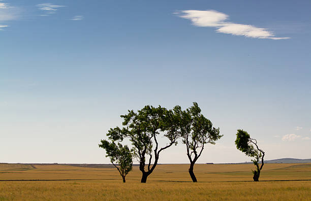 Trees on Aragon plains