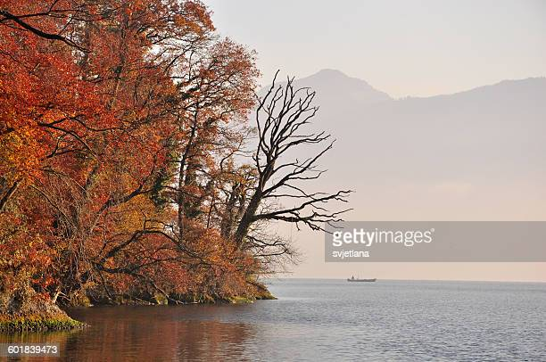 Trees on bank of Lake Zug, Switzerland