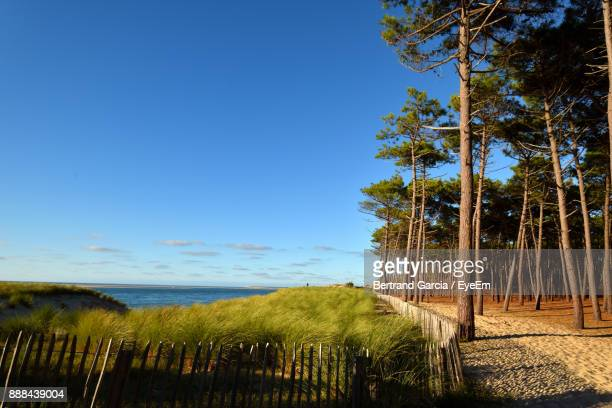 Trees On Beach Against Clear Blue Sky