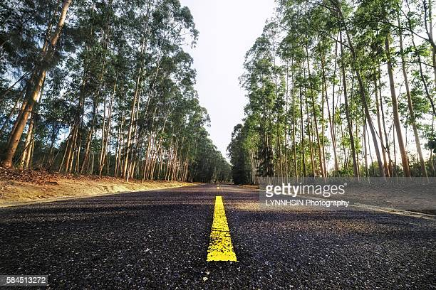 trees on both side of the road - lynnhsin stock pictures, royalty-free photos & images