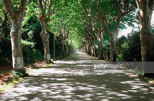 trees on both sides of a road, pont due grad, france - ガール県 ストックフォトと画像