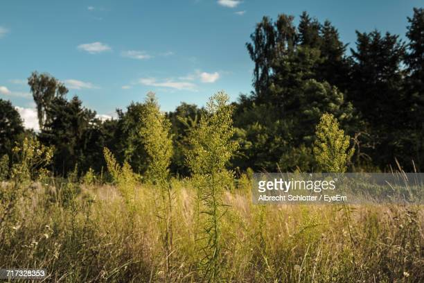 trees on countryside landscape - albrecht schlotter stock pictures, royalty-free photos & images