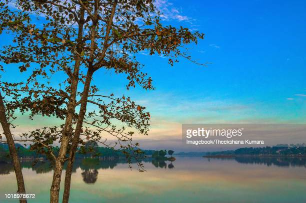 trees on diyawannawa lake against sky during sunrise - imagebook stock pictures, royalty-free photos & images