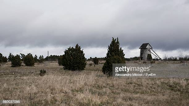 trees on dry grass in meadow against cloudy sky - alessandro miccoli fotografías e imágenes de stock